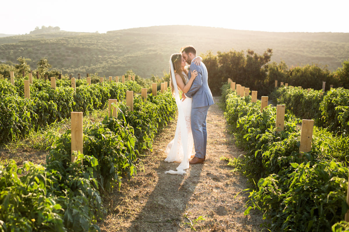 wedding photography on vineyards during sunset